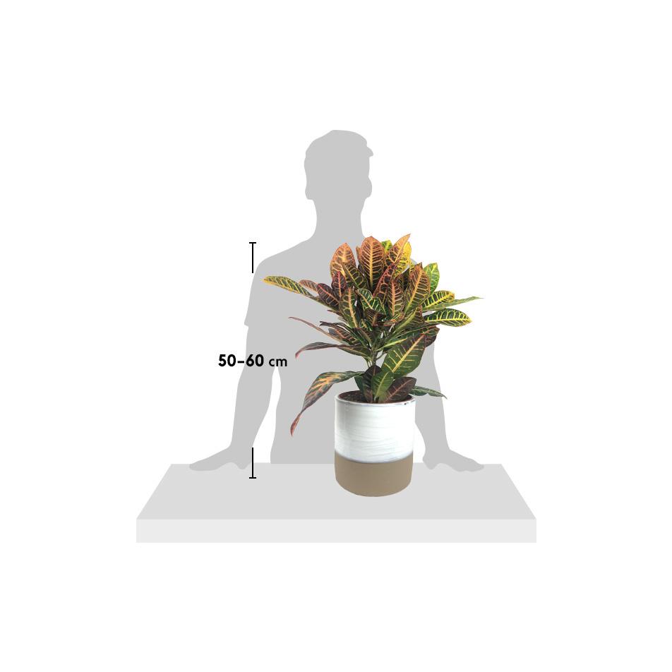silhouette-Codie