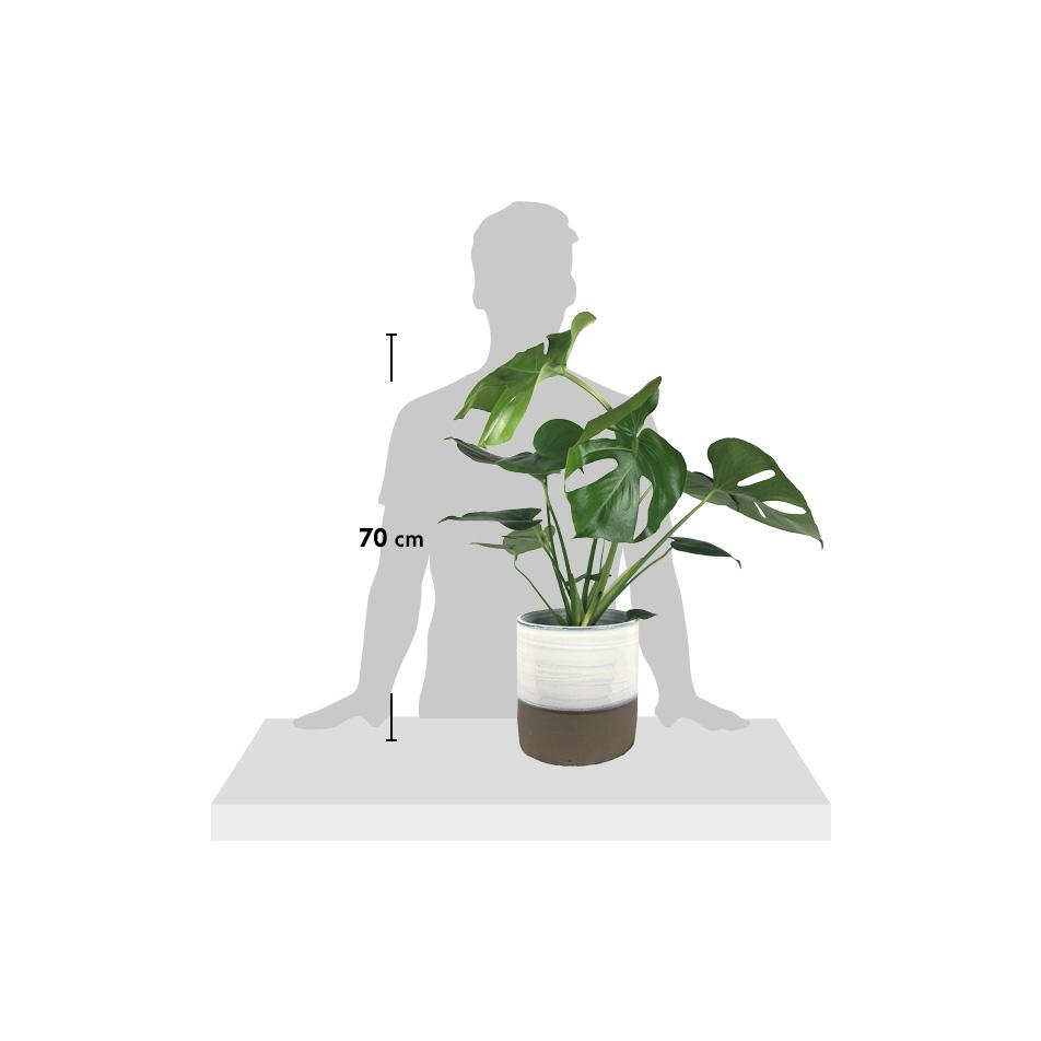 silhouette-Deli