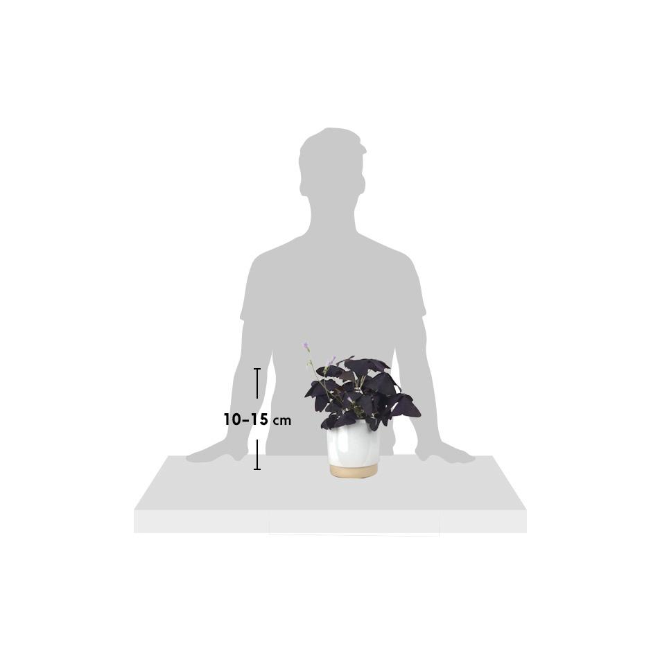 silhouette-Oxalie