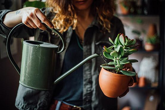 Entretien de plantes pour les professionnels
