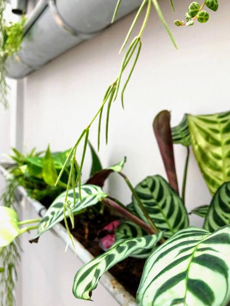 Décoration végétale d'un bureau et espace de coworking - Simundia - Paris